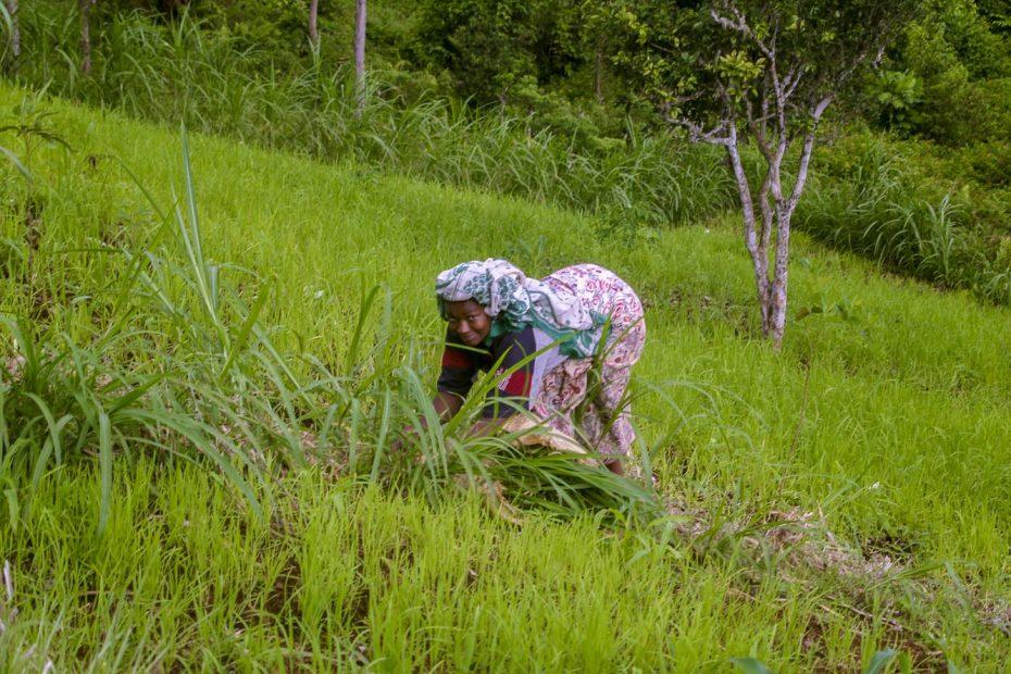 Dans les champs du Nyumakélé